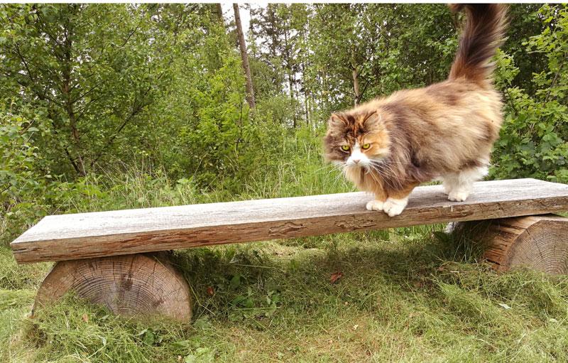"""Katten er den bedste muse og rotte """"fælde"""" der findes"""
