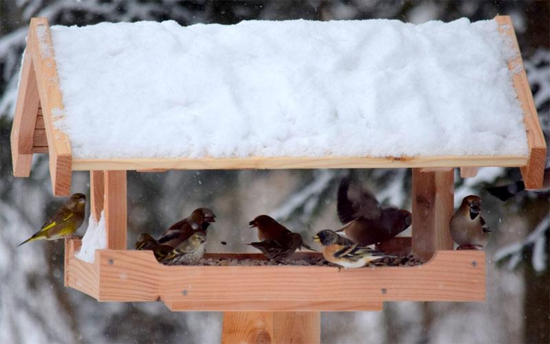 Fuglebræt med mange spisende gæster