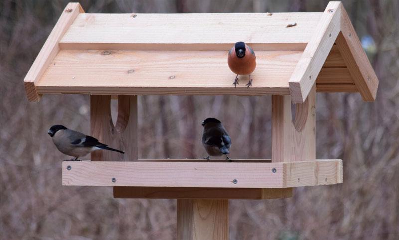 fuglebræt med fugle